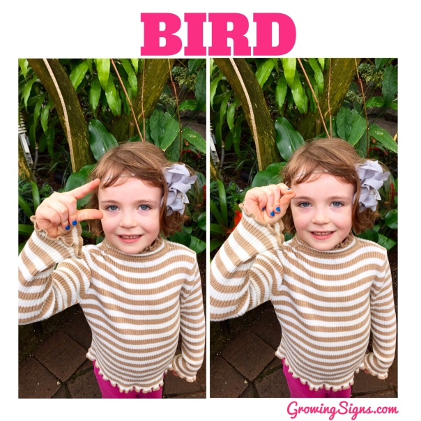 How to sign BIRD in American Sign Language --www.growingsigns.com