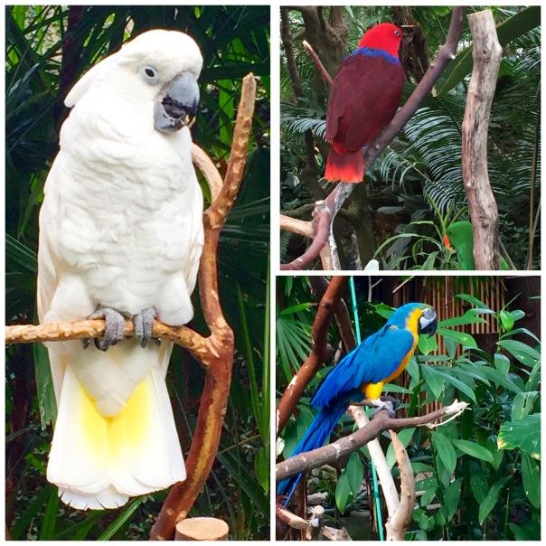 Bird trio  --www.growingsigns.com