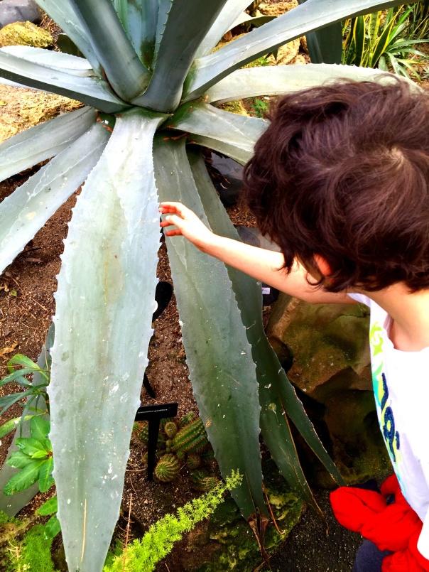 Giant Fronds  --www.growingsigns.com