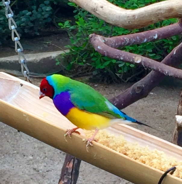 Rainbow Bird  --www.growingsigns.com
